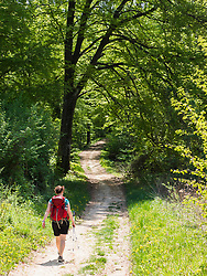 Woman hiking through forest near Wasenweiler, Baden-Wuerttemberg, Germany