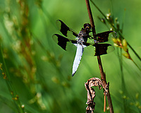 Dragonfly.  Image taken with a Leica SL2 camera and 90-280 mm lens.