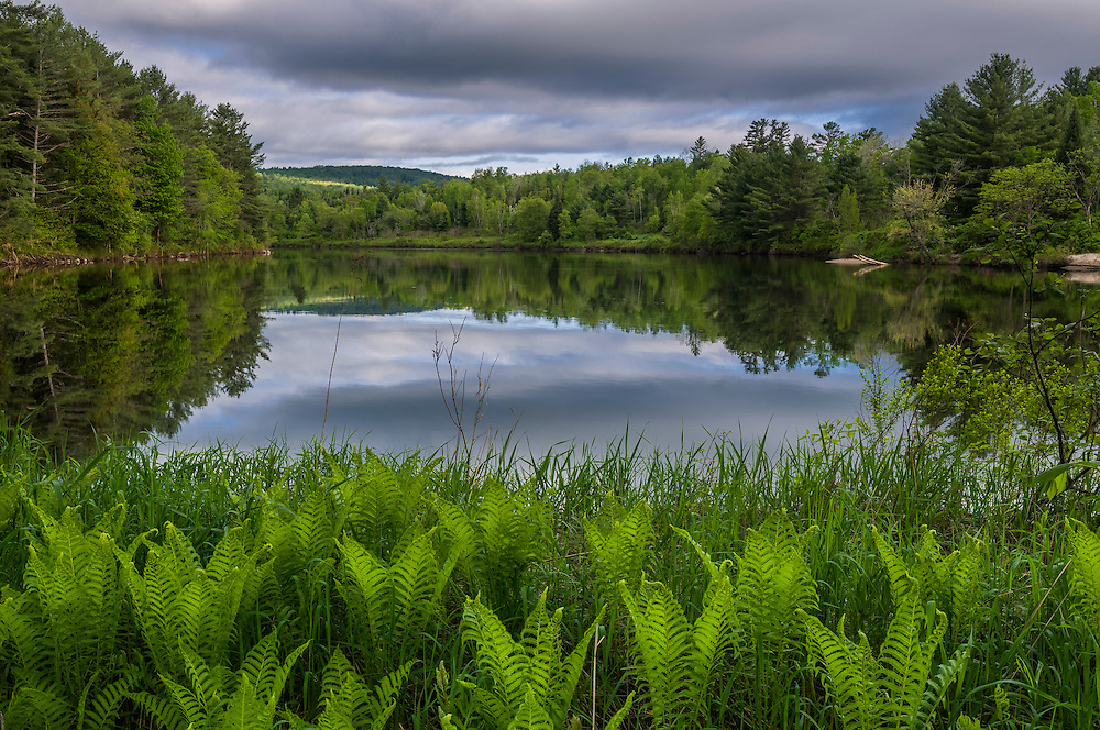 Connecticut River, clouds and reflections, with ferns, spring, Dalton, NH