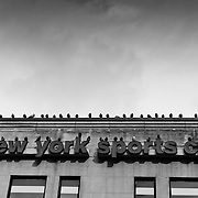 New York Sports Clubs with pigeons on the roof