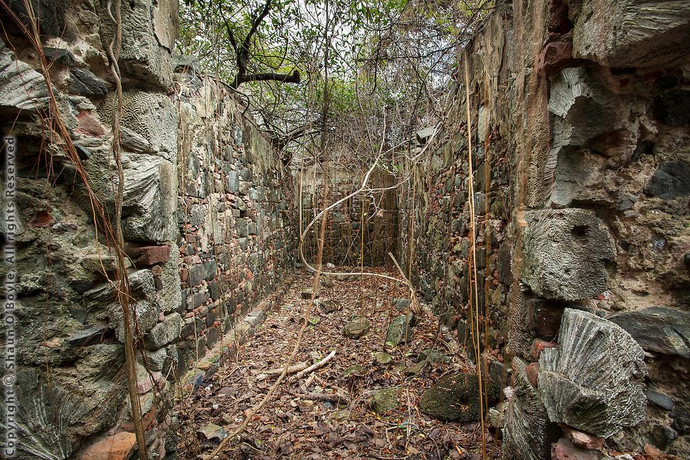 Coral Walls, Brown Bay Ruins, St John, USVI