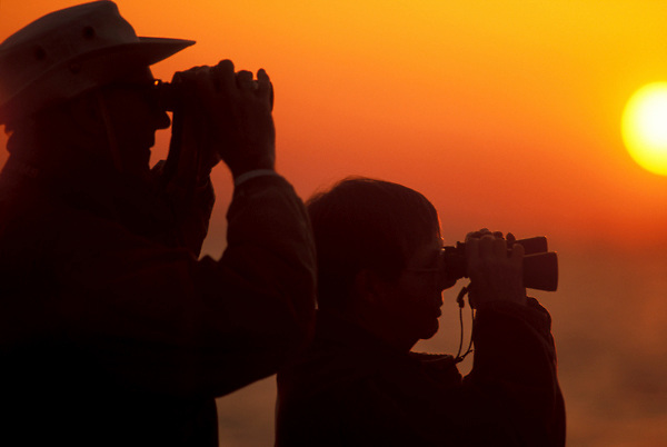 silhouette of bird watchers at sunset