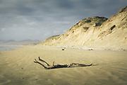 Sandy beaches in Mason Bay, The Southern Circuit, Stewart Island / Rakiura, New Zealand Ⓒ Davis Ulands | davisulands.com