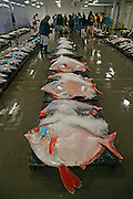 Fish Auction, Honolulu, Oahu, Hawaii