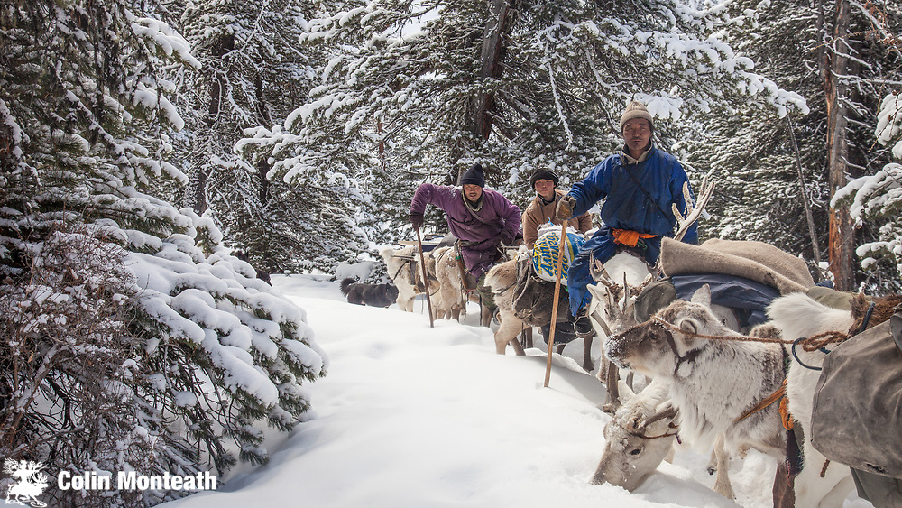 Tsaatan reindeer herders, winter in Taiga forest, Hunkher mountains, northern Mongolia