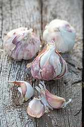 Allium sativum 'Early Purple Wight' - Garlic