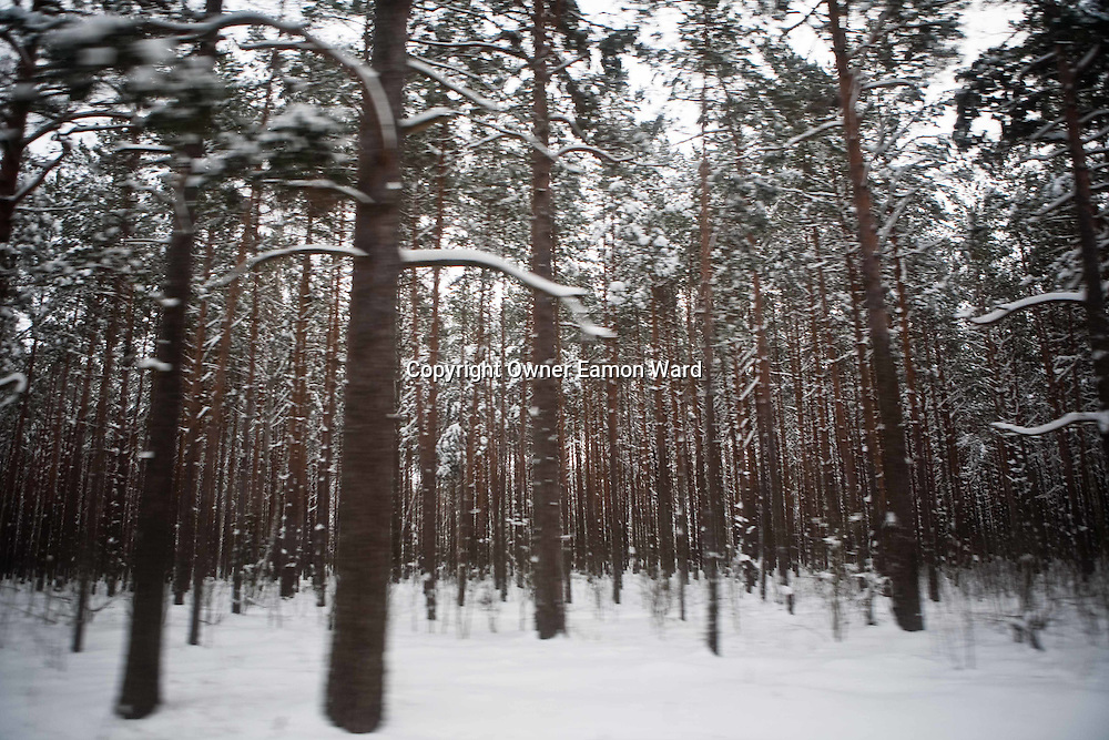 Radioactive forest in the exclusion zone. Chernobyl's human costs are widespread affecting about seven million people. A generation later children are being born with birth defects ,heart problems and thyroid cancer.The crippled economy of Belarus has led to poverty, social problems and domestic abuse.