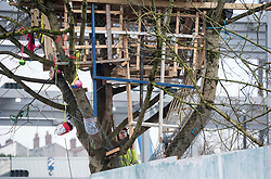 © Licensed to London News Pictures; 01/03/2021; Bristol, UK. Contractors prepare to cut down last remaining Maple tree out of the original five that Save The M32 Maples campaigners have been fighting to save. Contractors working for the owners began cutting the base of the tree before dawn when a woman called Kate got up the tree but no one was injured. Council contractors were then called in to complete the work and police blocked off the road. The campaign wants the importance of mature trees reflected in council policy and that developers integrate their projects whilst preserving existing trees to enhance the environment and help remove pollution in what is a traffic congested area. Photo credit: Simon Chapman/LNP.
