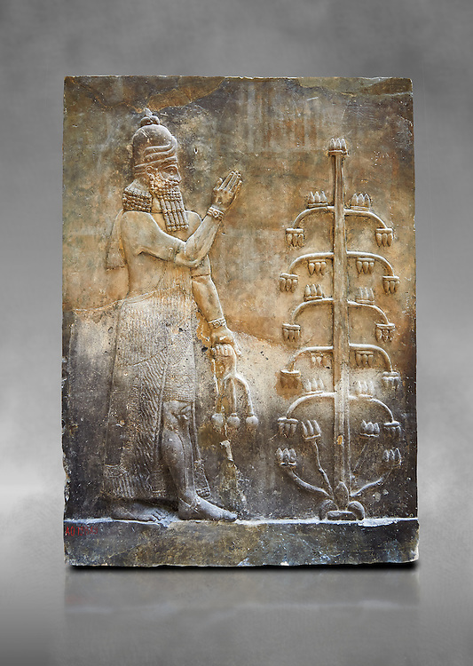 Stone relief sculptured panel of a Genie with poppy seed heads next ro the tree of life.  Inv AO 19869 from Dur Sharrukin the palace of Assyrian king Sargon II at Khorsabad, 713-706 BC.  Louvre Museum Room 4 , Paris .<br /> <br /> If you prefer to buy from our ALAMY PHOTO LIBRARY  Collection visit : https://www.alamy.com/portfolio/paul-williams-funkystock/ancient-assyria-antiquities.html  Refine search by adding background colour, place, subject, museum etc into the LOWER SEARCH WITHIN GALLERY box to <br /> <br /> Visit our ANCIENT ASSYRIAN PHOTO COLLECTIONS for more photos to download or buy as wall art prints https://funkystock.photoshelter.com/gallery-collection/Ancient-Assyrian-Art-Artefacts-Antiquities-Historic-Sites-Pictures-Images-of/C0000cjRqQyJjLag