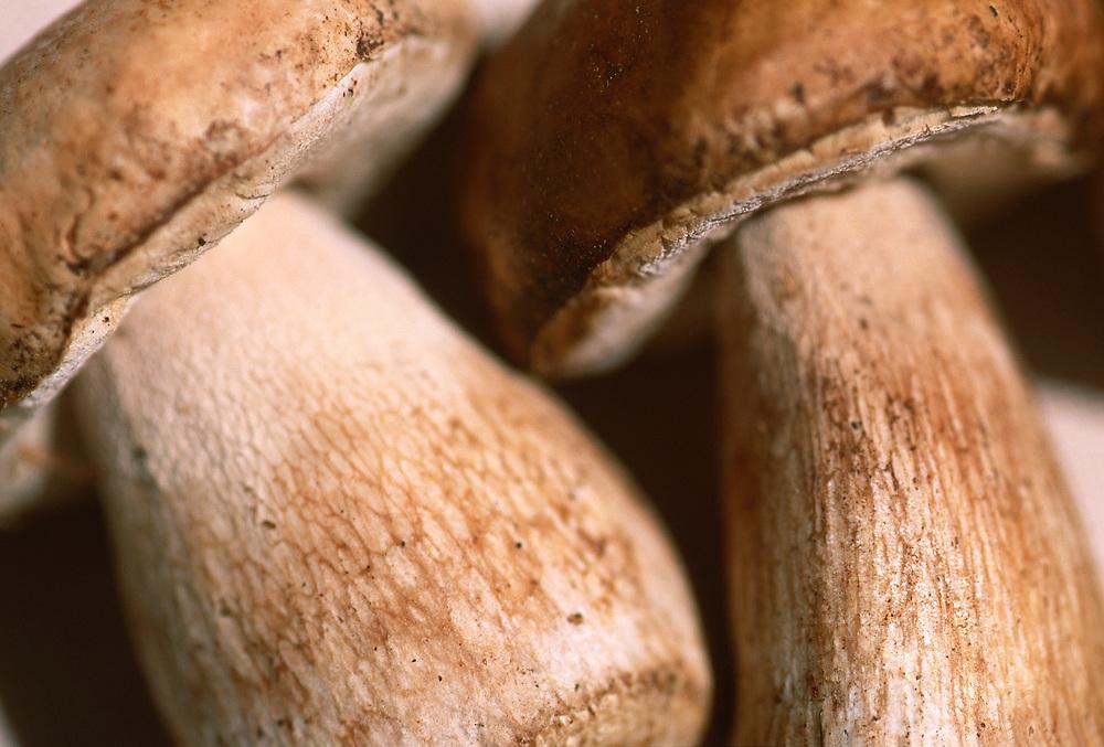 Close up selective focus photo of Porcini mushrooms
