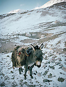 Our Donkey G, that we took in our trip through Litle Pamir in summer 2005..Campment of Tshar Tash (Haji Osman's camp), in the Wakhjir valley, at the source of the Oxus..Winter expedition through the Wakhan Corridor and into the Afghan Pamir mountains, to document the life of the Afghan Kyrgyz tribe. January/February 2008. Afghanistan