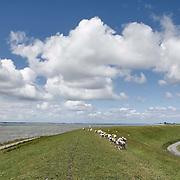 Nederland Ossenisse  gemeente Hulst  19 juni 2010 20100619     ..  Serie landschappen provincie Zeeland. Zeeuws-Vlaanderen, polderlandschap landschap dijk  westerschelde.  scenery. Schapen op de dijk.  Illustratief waterveiligheid, infrastructuur., schone lucht, schoon, schoonheid, sea level, sealevel, sheep, skies, space, sprankelend, sprankelende, stijging zeespiegel, stil, stilleven, stilte, stock, stockbeeld, streek, sustainable, terrein, typerend, typical dutch landscape, typisch hollands, typisch hollands landschap, typische, uitgestrektheid, uitzicht, uniek, unieke, veiligheid, veld, vergezicht, vergezichten, verte, vrij, vrijheid weer, water level, waterbeheer, Waterbeheerplan, waterhuishouding, waterkering, waterkeringen, Waterkeringen, waterlevel, watermanagement, waterniveau, waterpeil, waterplan, waterproblematiek, waterstaatkundige, waterstand, watersysteem, waterveiligheid, waterveiligheid en gebiedsontwikkeling, waterwerken, weersomstandigheden, wei, weide, weidegang, weiland, weiland. Landscape, wijdheid, wijds, wijdsheid, wit, witte, wolk, wolken, wolkenpartij, zeeland, zeeuws vlaanderen, zeeuws-vlaanderen, zeewering, zo vrij als een vogel, zware, zwitserleven gevoel  ..Foto: David Rozing