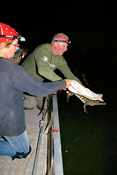 Audrey & Piers Releasing Crocodile
