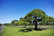 Japan, Tokyo Imperial Palace garden