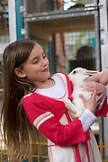 young girl of 6 playing with a rabbit in a children's zoo Model Release Available