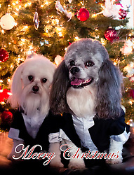 My buddies posing under the living room Christmas Tree in their tux