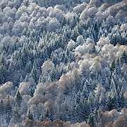 Sancy mountain wall with mixed trees covered with first snow