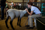 WASHINGTON, USA - September 29: A girl cuddles with her sheep after competing in the 4-H Sheep Show at the Calvert County Fair in Barstow, Md., USA on September 29, 2017. Livestock are often showcased at fairs and there are competitions for farmers and breeders to show off their animals.
