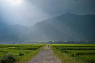 A man walks along a track that goes through rice fields, Than Uyên, Vietnam, Southeast Asia