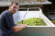 Grape reception at harvest. And Laurent Pataille, winemaker. Chateau de Tracy, Pouilly sur Loire, France
