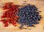 Red currants and blueberries, Winterlake Lodge, Finger Lake, Alaska.