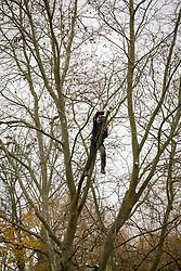 Tree surgeon using a chainsaw.