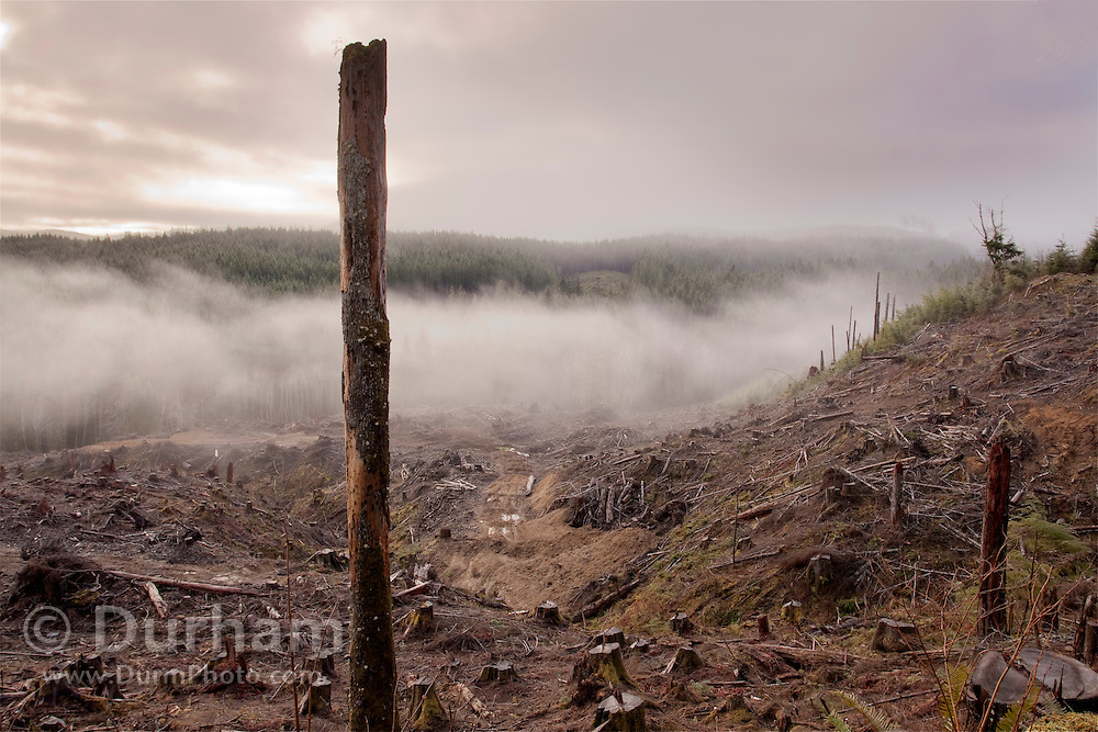 An old clear cut in the Clatsop State Forest, in the coastal mountains of Oregon.