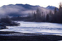Scenic of the Hoh River Rain Forest. Olympic National Park, WA
