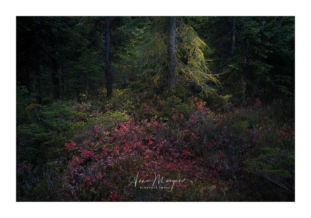 Moody intimate landscape of lush alpine scenery in Autumn in the North Cascades, Washington