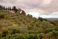 The olive groves and vineyard of Gagliole Vineyards, in Chianti Region, Tuscany, Italy