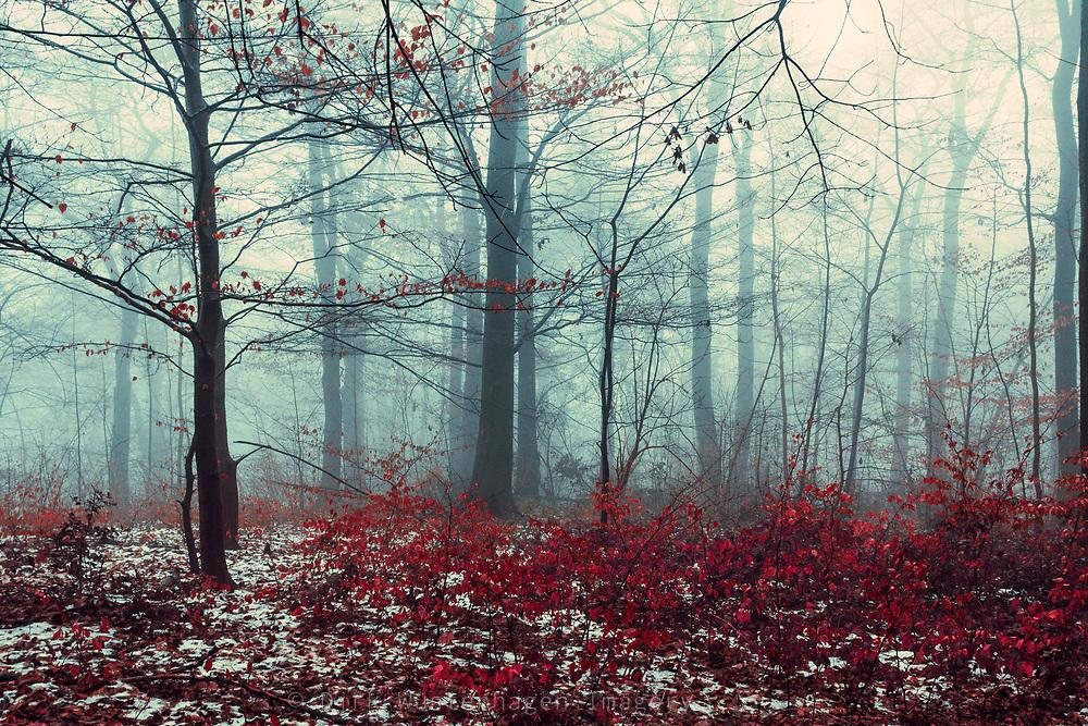 Wald an einem Wintertag, Wuppertal, Deutschland
