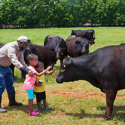 """Phil Campbell tries to get his grandchildren MacKenzie and Andrew to pet """"Cindy"""" at his ranch and orchard in Luther, Oklahoma. Campbell uses several conservation methods on his property, including building a pond to capture water runoff and prevent erosion. Nathan Lambrecht/Journal Communications"""