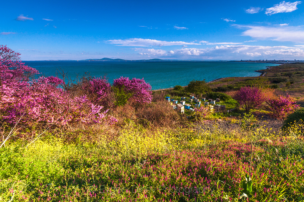 Rainy spring day by the coastline of Black Sea