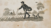 Sowing seed broadcast. Early 19th century engraving.