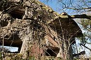 Ruined German gun battery in a forest near Batterie Todt, Pas-de-Calais, France © Rudolf Abraham