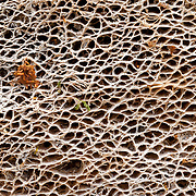 Macro image of cactus texture and pattern in South Texas.