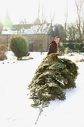 Man Dragging Christmas Tree on Snow