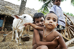 Brother and siter snapped in the background of cows – Gudul Mallick (Brother), 1, Gayatri Mallick (Sister), 5. Elder children are usually given the task of looking after siblings. Ratapata Village, Badamba, INDIA