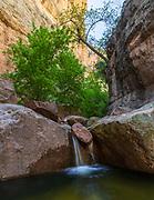A smal cascade flows in Parsons Canyon, Aravaipa Canyon Wilderness