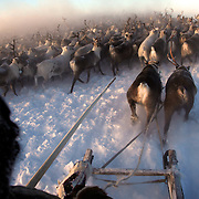 """Nenets live in -40C (-40F) in tents, or """"Yurts"""", in the Arctic tundra outside the city of Naryan-Mar in the Russian Nenets Autonomous Region.  .Their main livelihood is  reindeers -- they sell the meat to sausage factories and the antlers to China for use as traditional medicine including aphrodisiac."""