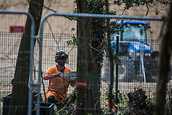 Wendover, UK. 9th April, 2021. A tree surgeon fells a tree in Jones Hill Wood, ancient woodland said to have inspired Roald Dahl, during tree felling operations for the HS2 high-speed rail link. Tree felling work began this week, in spite of the presence of resting places and/or breeding sites for pipistrelle, barbastelle, noctule, brown long-eared and natterer's bats, following the issuing of a bat licence to HS2's contractors by Natural England on 30th March.