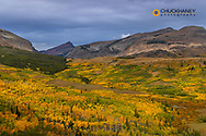 Autumn Aspen Groves with Red Mountain in Glacier National Park, Montana, USA