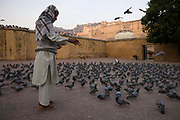 A man feed the pigeons just after sunrise below the Amber Fort. Jaipur, India<br /> The Amer Fort, was built over the remnants of an earlier structure during the reign of Raja Man Singh, Commander in Chief of Akbar's army in 1592.The structure was expanded by his descendants, over the next 150 years