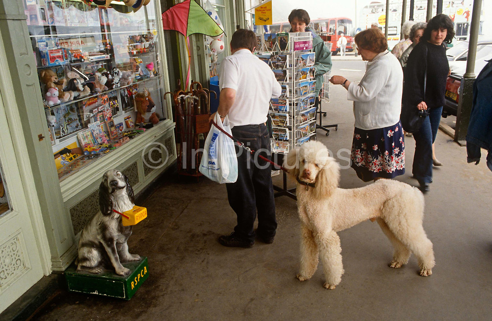 A pet poodle looks towards us in the same way that an RSPCA charity box model spaniel does outside a seaside shop tourist. The shop is selling seaside resort holiday tourist trinkets – a postcard rack has been carefully placed in the middle of the pavement (sidewalk) as holidaymakers pass-by to browse the cheap mementoes. The owner of the poodle has stopped to choose some cards for those at home and allows his dog a little slack on the lead. The dog cranes its neck towards the viewer, matching the posture and stance of the model charity spaniel whose cast sits, posing in a sorrowful and empathy-making show of need, suffering and want – enough perhaps to encourage people to give to this charity, the RSPCA (the Royal Society for the Protection of Animals).