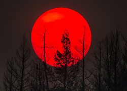 July 30, 2017 - Williams Lake, BC, Canada - The sun is obscured by smoke from wildfires in the distance behind burnt trees in Williams Lake. There are currently 151 wildfires burning and according to the B.C. Wildfire service more than 4,200 square kilometres have burned since April 1. Prime Minister Trudeau is to visit areas affected by wildfires Monday. (Credit Image: © Darryl Dyck/The Canadian Press via ZUMA Press)