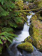 Watson Creek, Douglas County, Oregon, USA. To get there, turn onto Road 37, off Highway 138 near the east entrance to Toketee Ranger station (Umpqua National Forest), about 60 miles east of Roseburg.