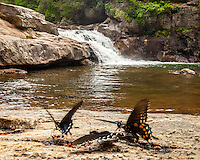 Brush-footed Buterfly,Jacks River, Cohutta Wilderness, Chattahoochee National Forest