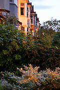 Suburban houses and their front garden shrubs in evening summer sunshine, on 7th June 2021, in south London, England.