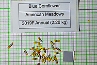 Blue Cornflower seeds from American Meadows. Image taken with a Fuji X-H1 camera and 80 mm f/2.8 macro lens + 1.4x teleconverter
