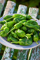 Chilli 'Padron' on a plate